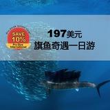Add-On 套餐增值 | 海洋奇观——旗鱼围捕沙丁鱼,浮潜一日游