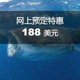 鲸鲨浮潜一日游